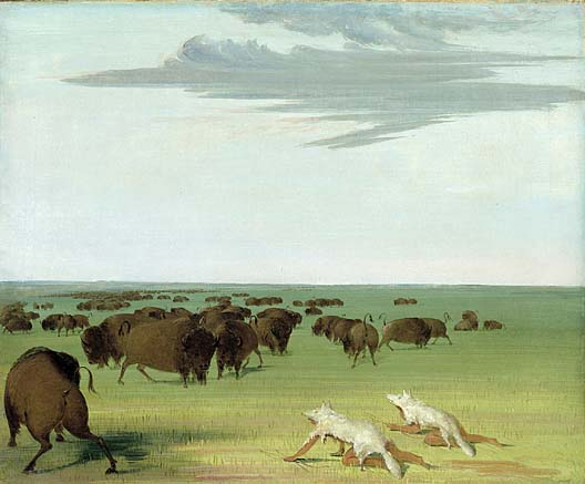 Buffalo Hunt under the Wolf skin Mask 1832 1833 | George Catlin | Oil Painting