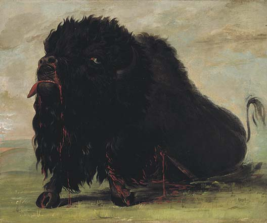 Dying Buffalo Shot with an Arrow 1832 1833 | George Catlin | Oil Painting