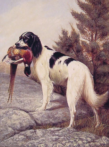 Hunting Dog With Pheasant | Alexander Pope | Oil Painting