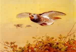 English Partridge In Flight | Archibald Thorburn | Oil Painting