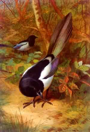 Magpies | Archibald Thorburn | Oil Painting