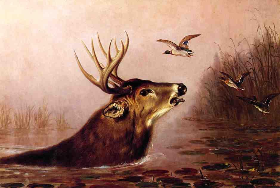 Deer in Marsh 1873 | Arthur Fitzwilliam Tait | Oil Painting