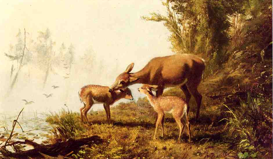 Deer in the Woods | Arthur Fitzwilliam Tait | Oil Painting
