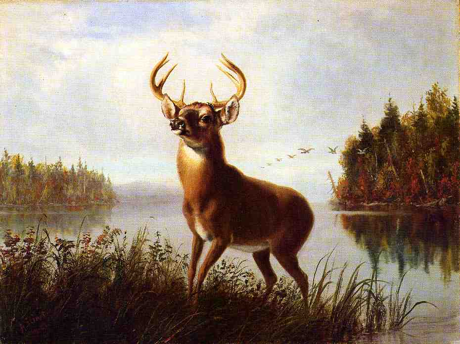 Eight Point Stag 1881 | Arthur Fitzwilliam Tait | Oil Painting