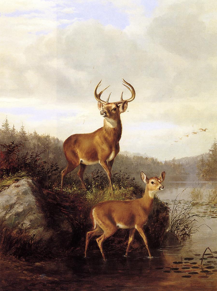 Buck and Doe 1878 | Arthur Fitzwilliam Tait | Oil Painting