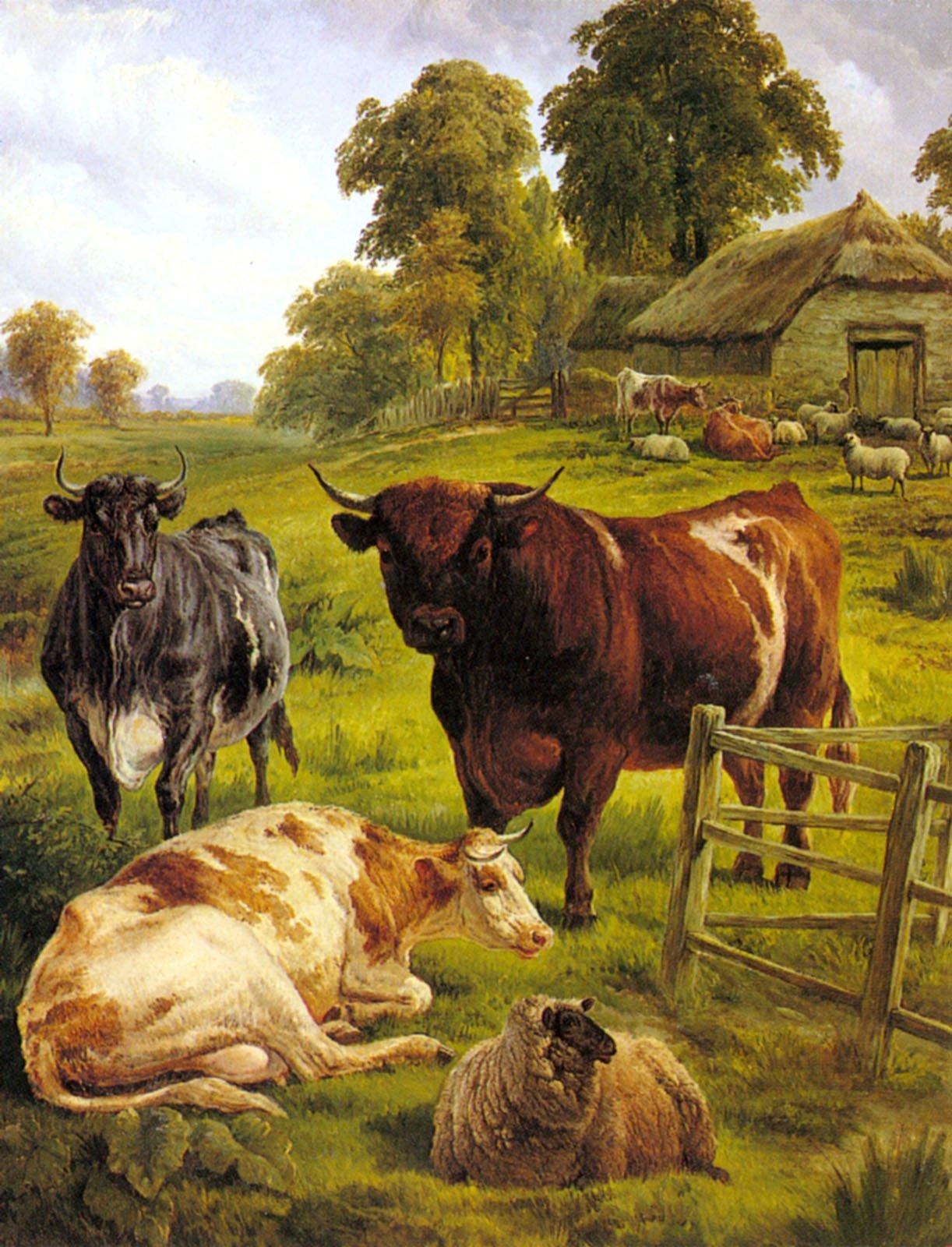 A Pedigree Bull | Charles Jones | Oil Painting