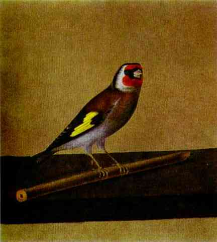 A Bird 1810s | Count Feodor Tolstoy | Oil Painting