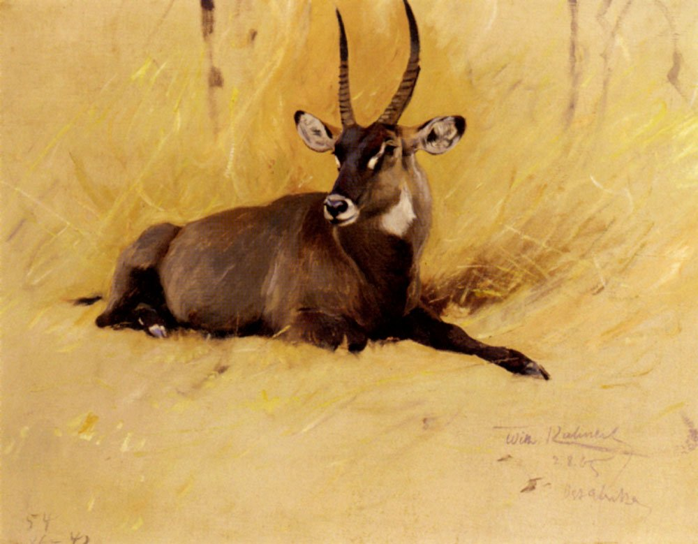A Common Waterbuck | Friedrich Wilhelm Kuhnert | Oil Painting