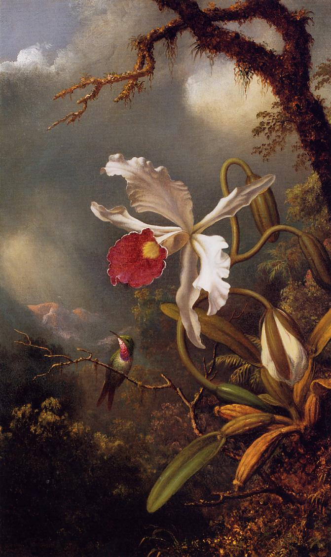 An Amethyst Hummingbird with a White Orchid  1875-1890 | Martin Johnson Heade | Oil Painting