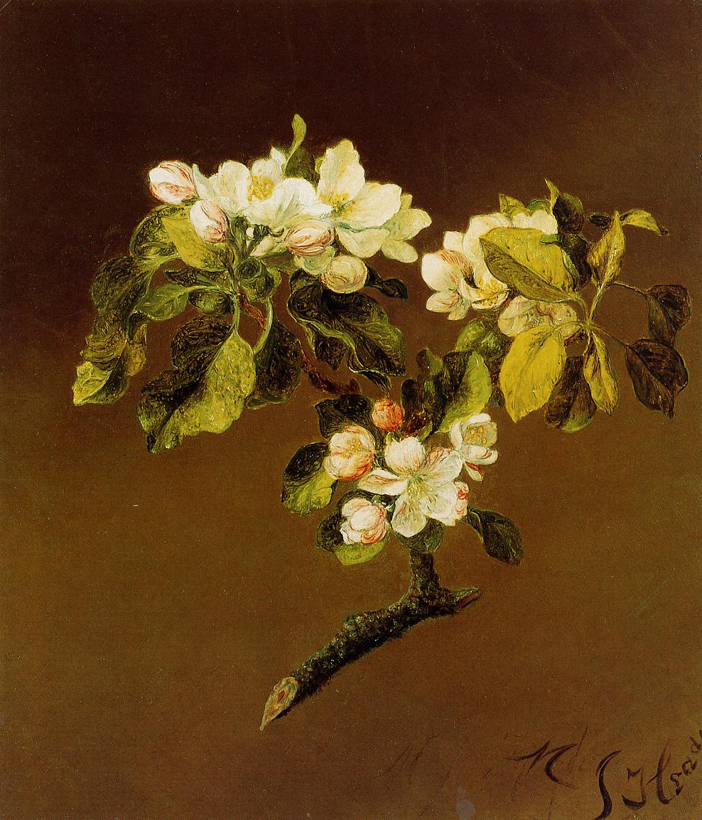A Spray of Apple Blossoms 1870 | Martin Johnson Heade | Oil Painting