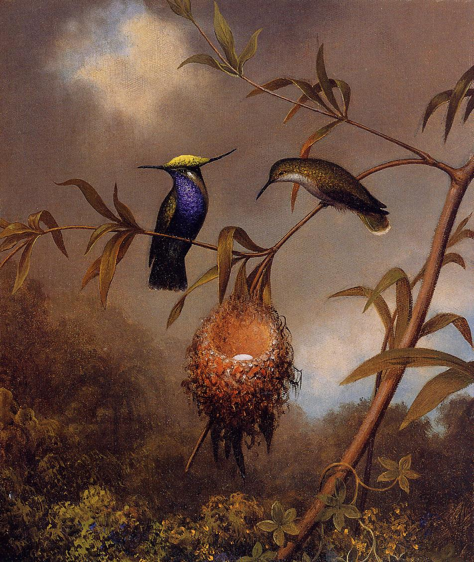 Black-Breasted Plovercrest 1864-1865 | Martin Johnson Heade | Oil Painting
