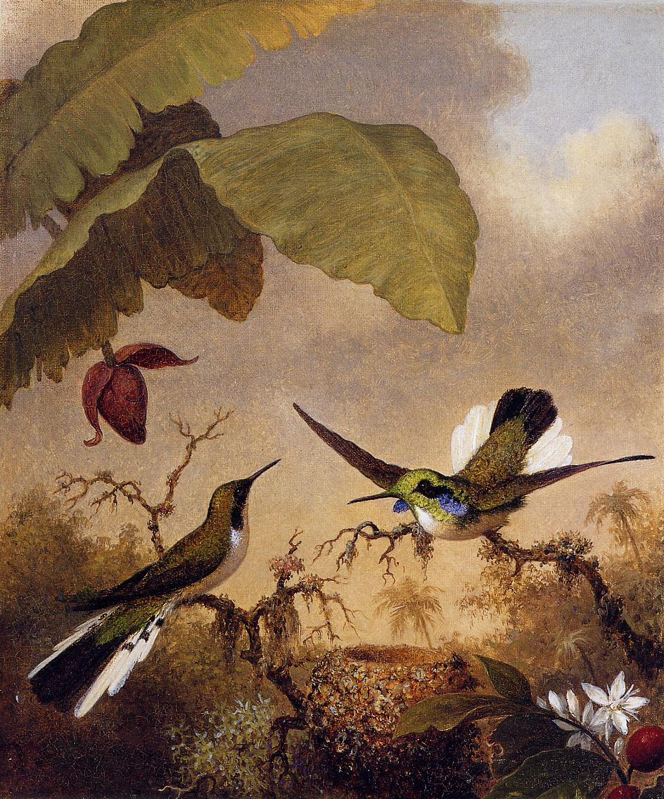 Black-Eared Fairy 1864-1865 | Martin Johnson Heade | Oil Painting