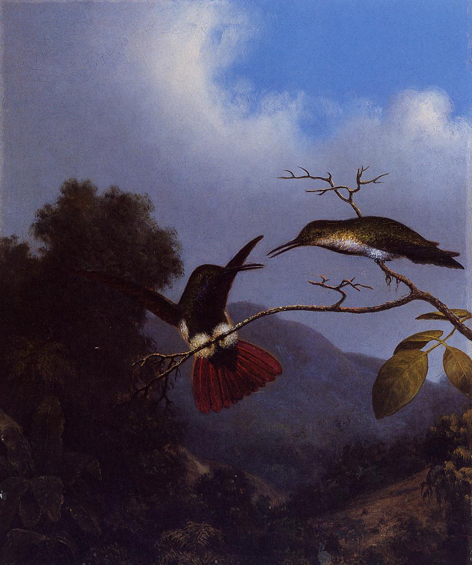Black-Throated Mango 1864-1865 | Martin Johnson Heade | Oil Painting