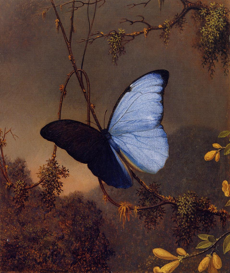 Blue Morpho Butterfly 1864-1865 | Martin Johnson Heade | Oil Painting