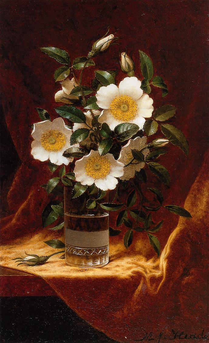 Cherokee Roses in a Glass 1883-1895 | Martin Johnson Heade | Oil Painting