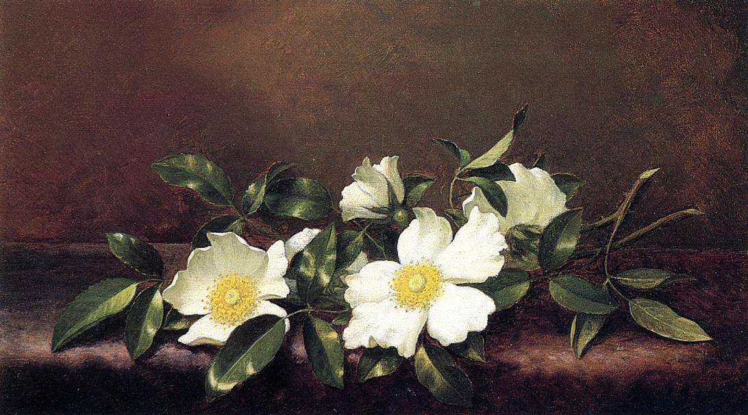 Cherokee Roses on a Purple Velvet Cloth 1890 | Martin Johnson Heade | Oil Painting