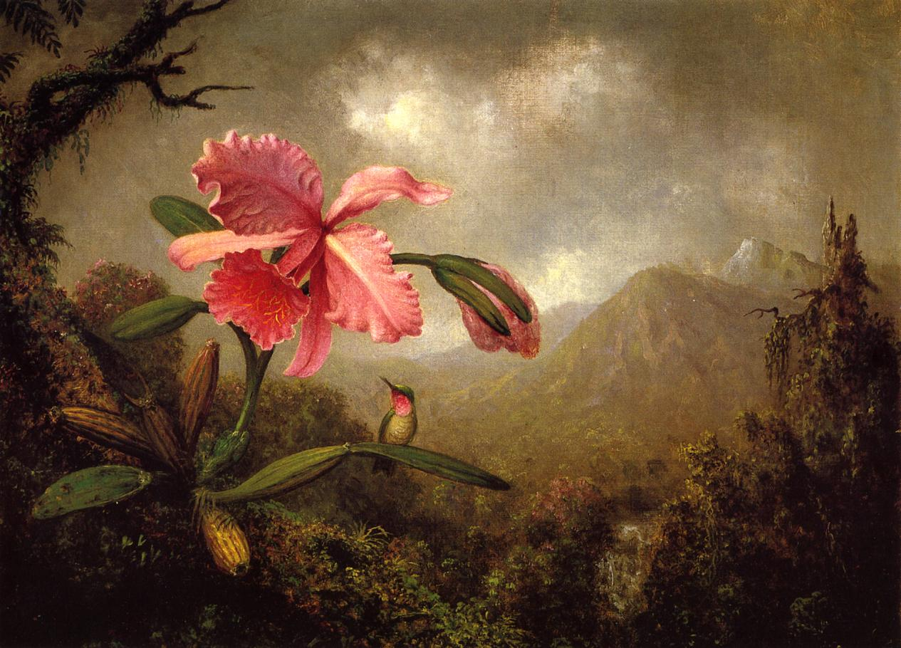 Orchid and Hummingbird near a Mountain Waterfall 1902 | Martin Johnson Heade | Oil Painting