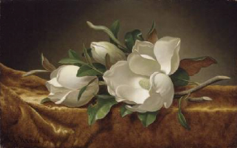 Magnolias on Gold Velvet Cloth 1888 | Martin Johnson Heade | Oil Painting