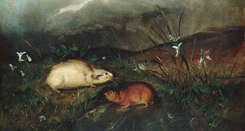 Hudson's Bay Lemming 1846 | John Woodhouse Audubon | Oil Painting