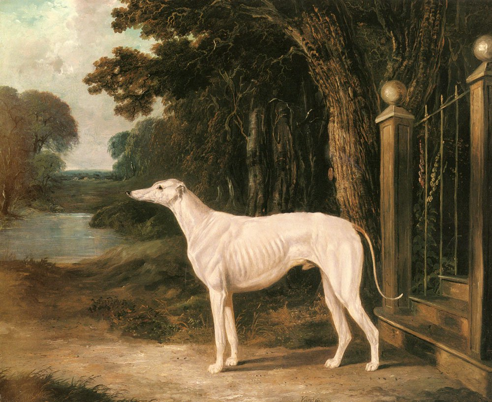 Vandeau A White Greyhound | John Frederick Snr Herring | Oil Painting