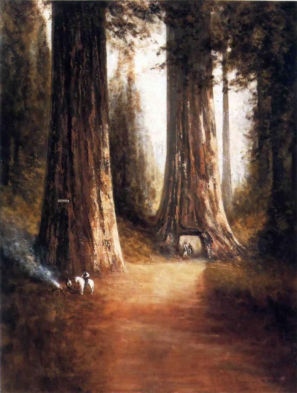 Sequoia Gigantea | Thomas Hill | Oil Painting