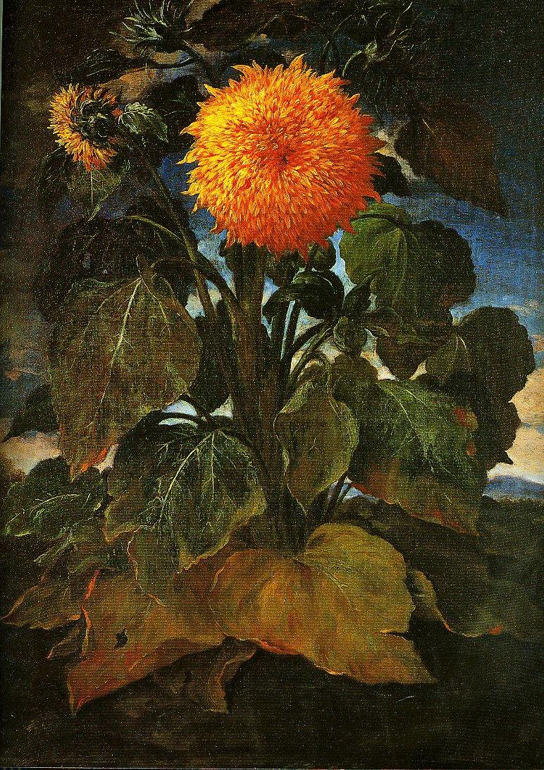 Sunflower | Bartolomeo Bimbi | Oil Painting