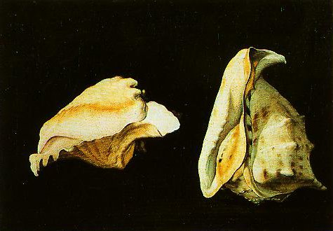 Two Shells | Filippo Napoletano | Oil Painting
