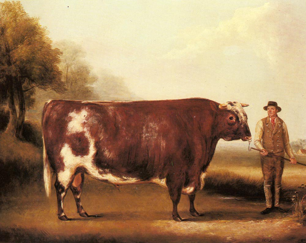 A Dark Roan Bull | William Davis | oil painting