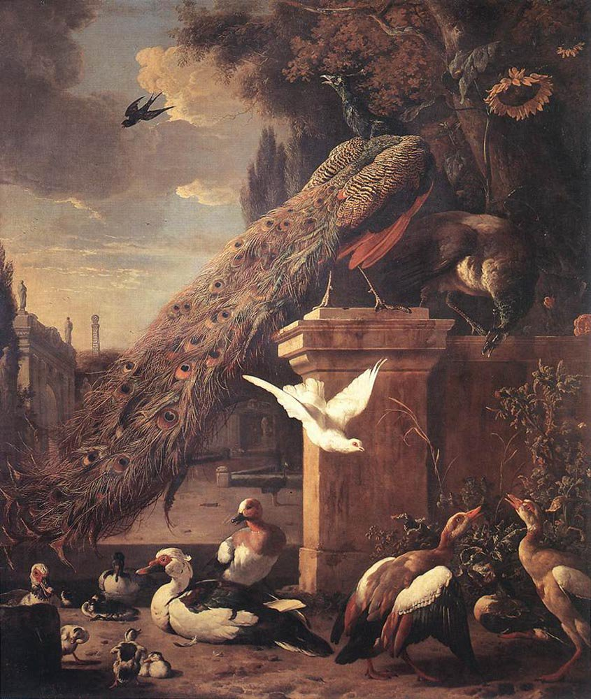 Peacocks and Ducks 1680 | Melchior d' Hondecoeter | oil painting
