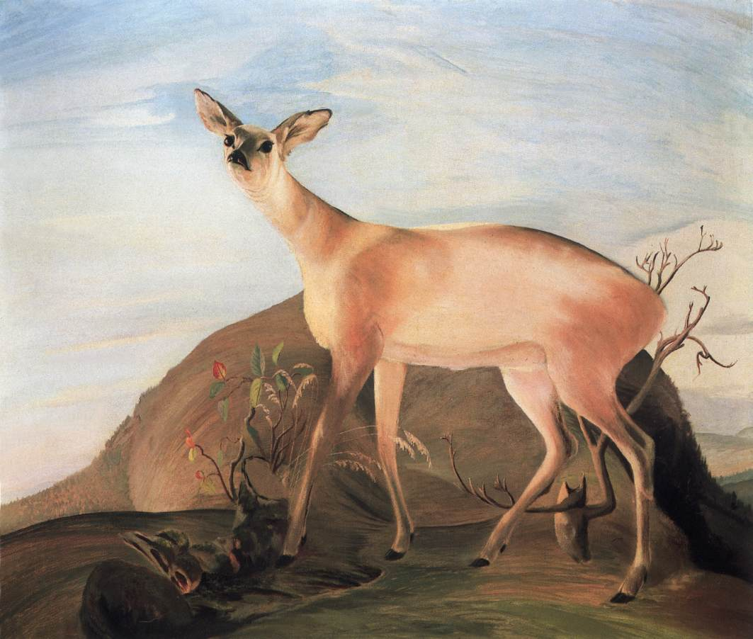 Deer 1893 | Kosztka Tivdar Csontvary | oil painting