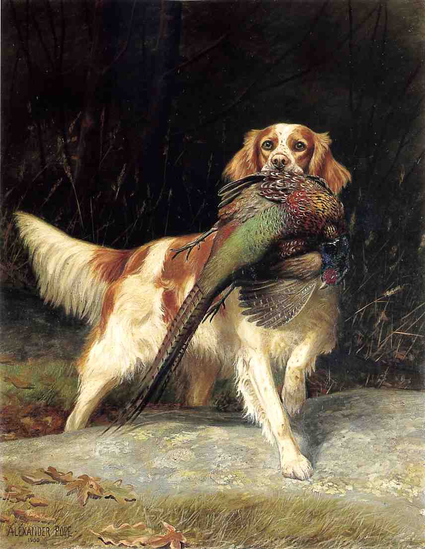 SpringerSpanielwithPheasant1900 | AlexanderPope | oil painting