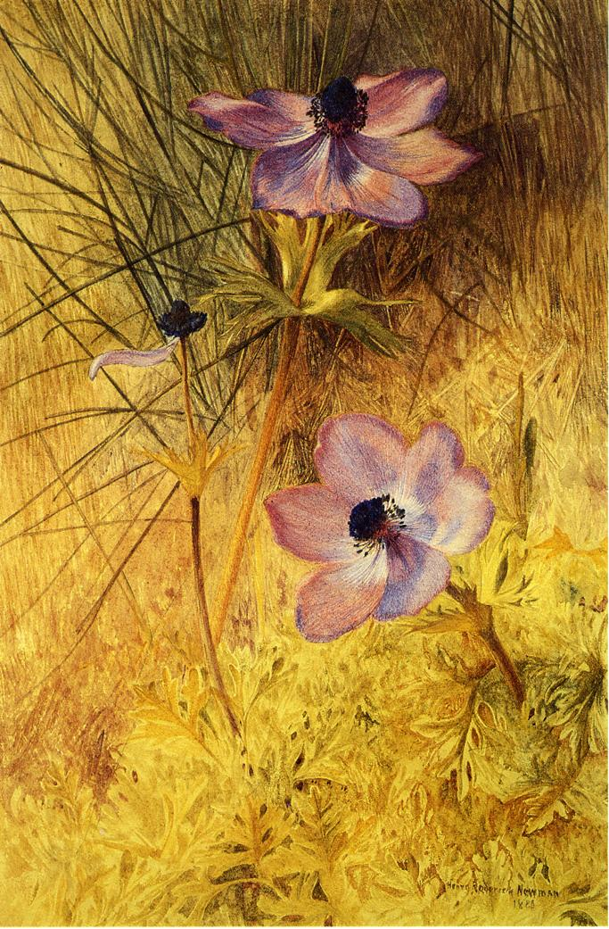 Florentine Wild Anemones 1880 | Henry Roderick Newman | oil painting