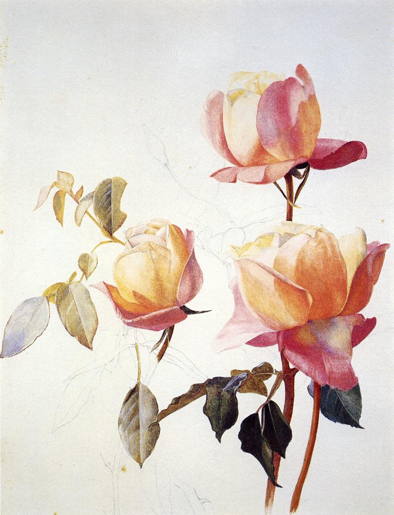 Florentine Roses 1881 | Henry Roderick Newman | oil painting