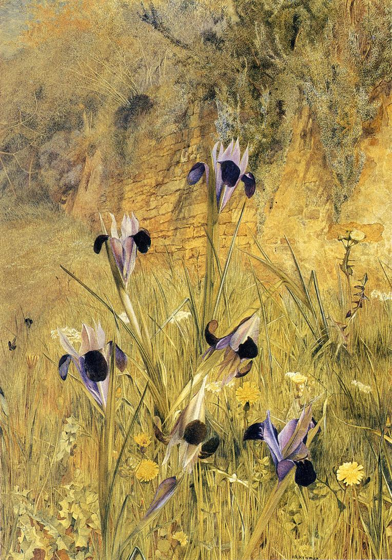 Irises in the Garden 1882 | Henry Roderick Newman | oil painting