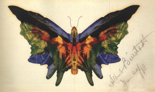Butterfly 1893 | Albert Bierstadt | oil painting