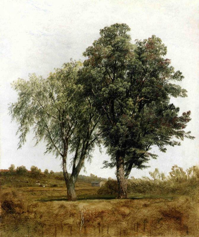 A Study of Trees | John Frederick Kensett | oil painting