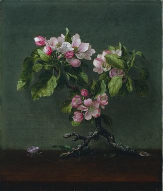 Apple Blossoms | Martin Johnson Heade | oil painting