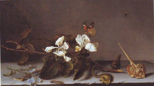 Still Life With Apple Blossoms | Balthasar Van Der Ast | oil painting