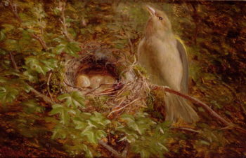 A Greenfinch at its Nest 1877 | William Hughes | oil painting