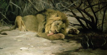 Lion Reclining in a Landscape | Wilhelm Kuhnert | oil painting