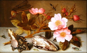 Still life depicting flowers shells and a dragonfly | Balthasar van der Ast | oil painting