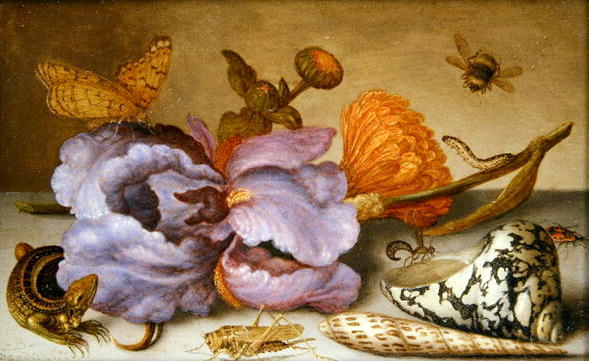 Still life depicting flowers shells and insects | Balthasar van der Ast | oil painting