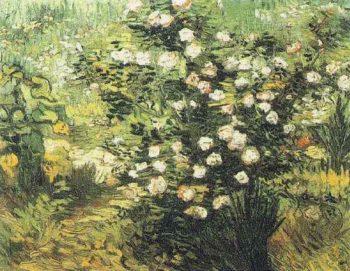 Rosebush in Blossom | Vincent Van Gogh | oil painting