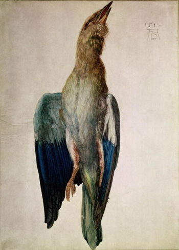 Blue Crow 1512 | Albrecht Durer | oil painting
