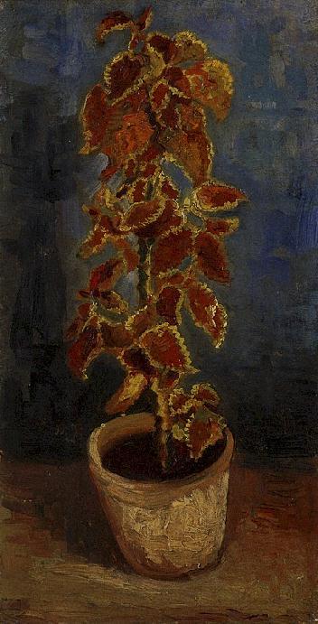 Coleus Plant in a Flowerpot   Vincent Van Gogh   oil painting