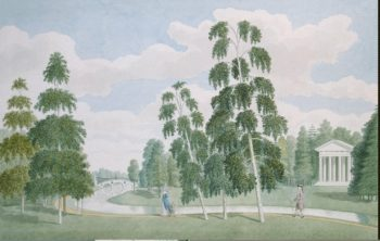 View of the English Park with the Birch House. Peterhof | MeaderJames | oil painting