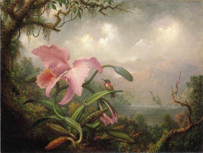 Orchid and Hummingbird   Martin Johnson Heade   oil painting