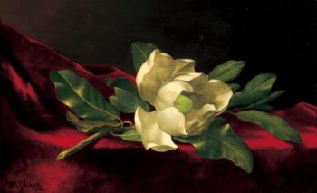 Magnolia | Martin Johnson Heade | oil painting