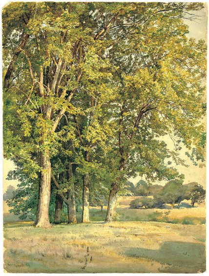 Maples in Chester County Pennsylvania | William Trost Richards | oil painting