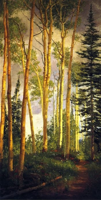 Quaking Aspens Aspen Grove | John Hafen | oil painting